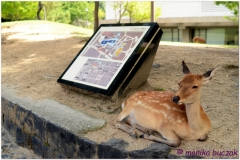 20120905 Japonia Nara (12)