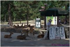 20120905 Japonia Nara (15)