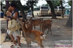 20120905 Japonia Nara (49)