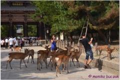 20120905 Japonia Nara (53)