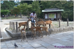 20120905 Japonia Nara (54)