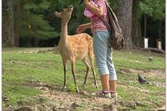 20120905 Japonia Nara (63)