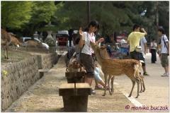 20120905 Japonia Nara (65)