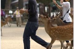 20120905 Japonia Nara (67)