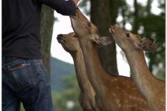 20120905 Japonia Nara (69)