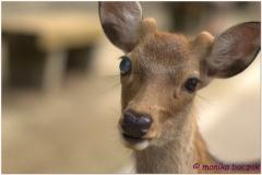 20120905 Japonia Nara (71)