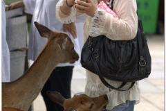 20120905 Japonia Nara (76)