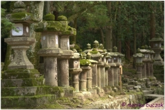 20120905 Japonia Nara (84)