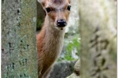 20120905 Japonia Nara (92)