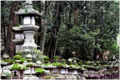20120905 Japonia Nara (95)