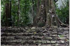 20130505 Meksyk Palenque 43