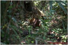 20130507 Gwatemala Tikal-Remate 79