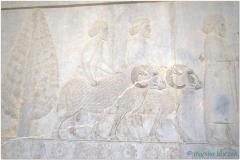 20140825 3 Persepolis 73