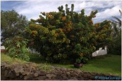 20151128 Rapa Nui 00011