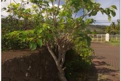 20151128 Rapa Nui 00013