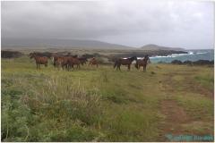 20151129 Rapa Nui 00058
