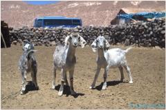 20151203 Atacama 4 00009