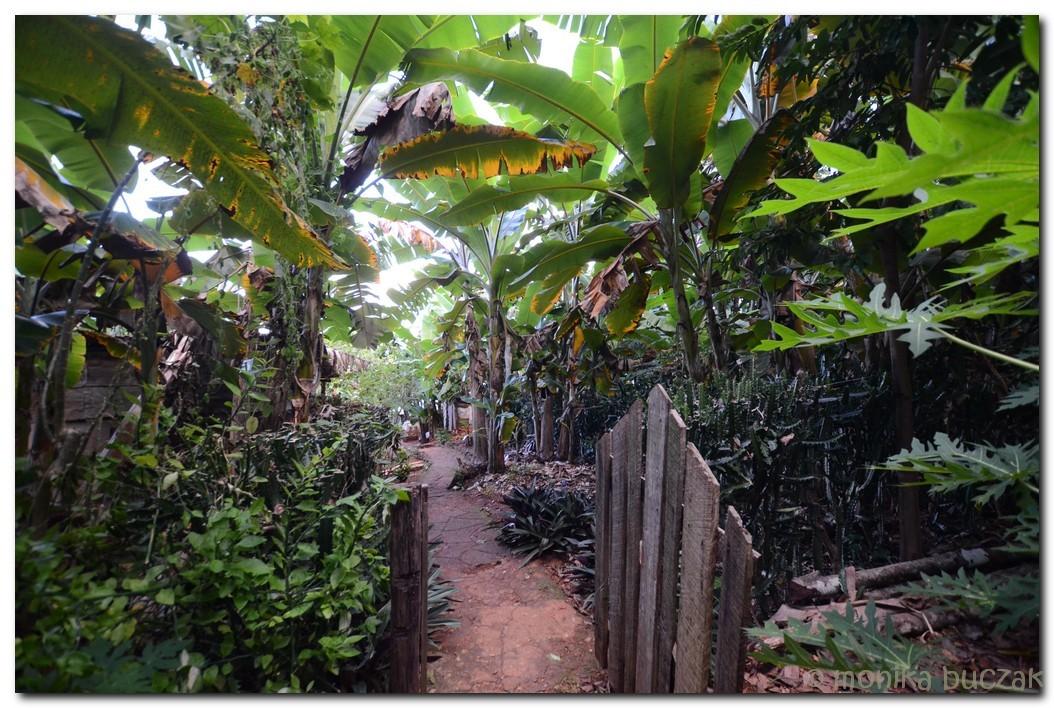 Kuba 2011 3 (15)