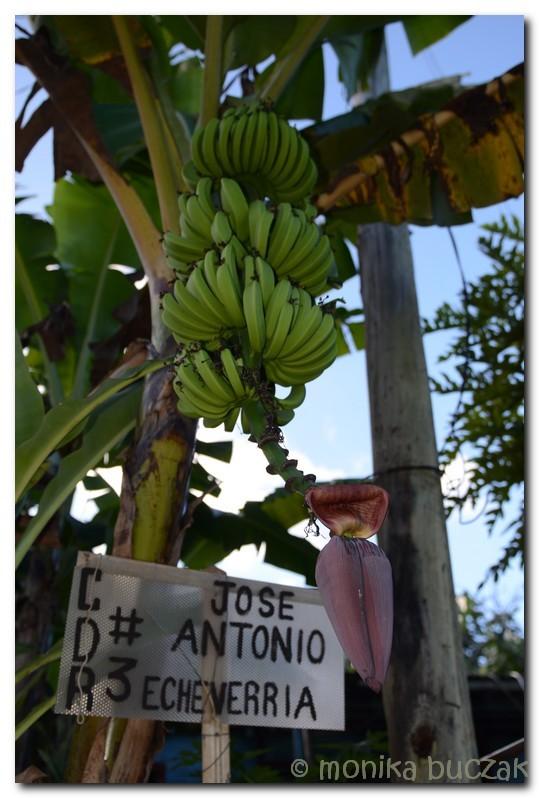 Kuba 2011 3 (4)