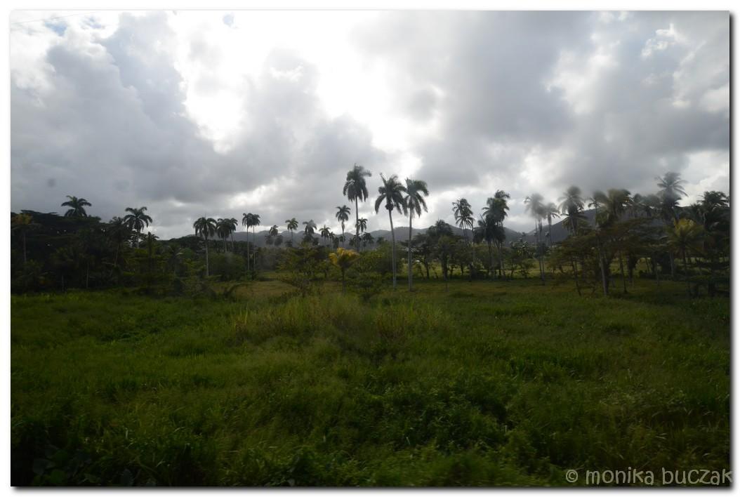 Kuba 2011 3 (63)
