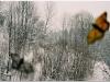 2005-wypasione-slowackie-motyle