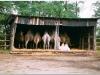 200307-safari-gansendorf-16
