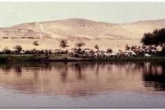 1991-3-Egipt-41