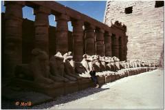 1991-3-Egipt-68