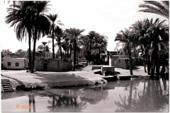 1991-3-Egipt-93
