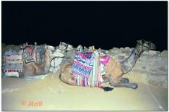 2003-Sharm-15