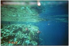 2003-Sharm-3_DxO