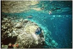 2003-Sharm-5_DxO