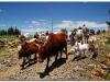 4 Axum-Yeha-Axum 20090918-20 (41)