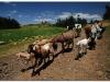 4 Axum-Yeha-Axum 20090918-20 (42)