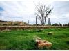 4 Axum-Yeha-Axum 20090918-20 (6)