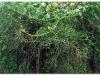 3-ff-gondar-20090916-17-2