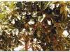 4-ff-axum-yeha-20090918-20-3