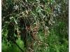 faunaflora-etiopii-13