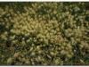faunaflora-etiopii-19