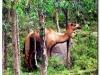faunaflora-etiopii-20