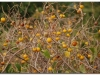 faunaflora-etiopii-32