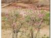 faunaflora-etiopii-36