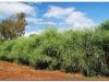 faunaflora-etiopii-40
