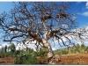 faunaflora-etiopii-41