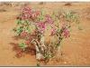 faunaflora-etiopii-44