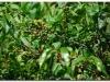 faunaflora-etiopii-7