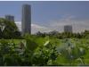 20120823-japonia-tokio-22and1more_fused