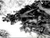 20120825-japonia-tokio-hakone-86b