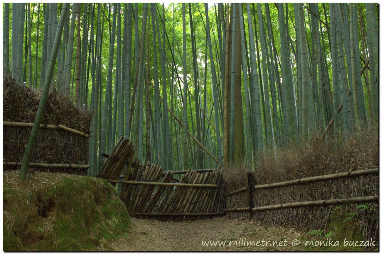 201200831-japonia-kioto-133