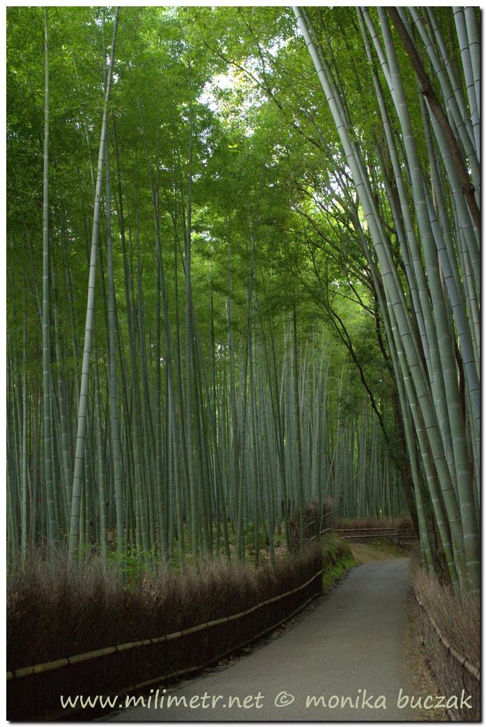 201200831-japonia-kioto-138
